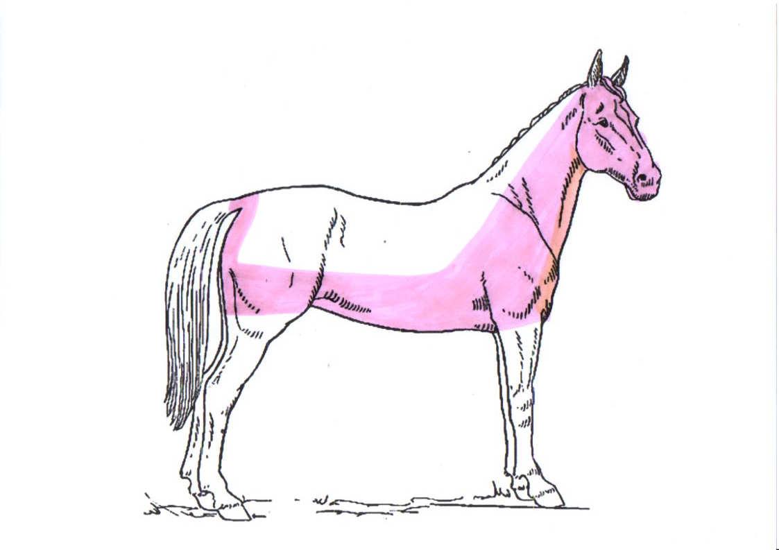 pferd-schermuster-chaser