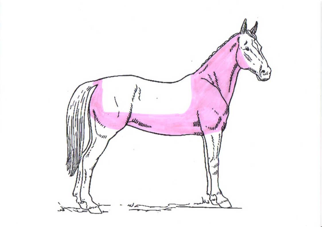 pferd-schermuster-deckenschur