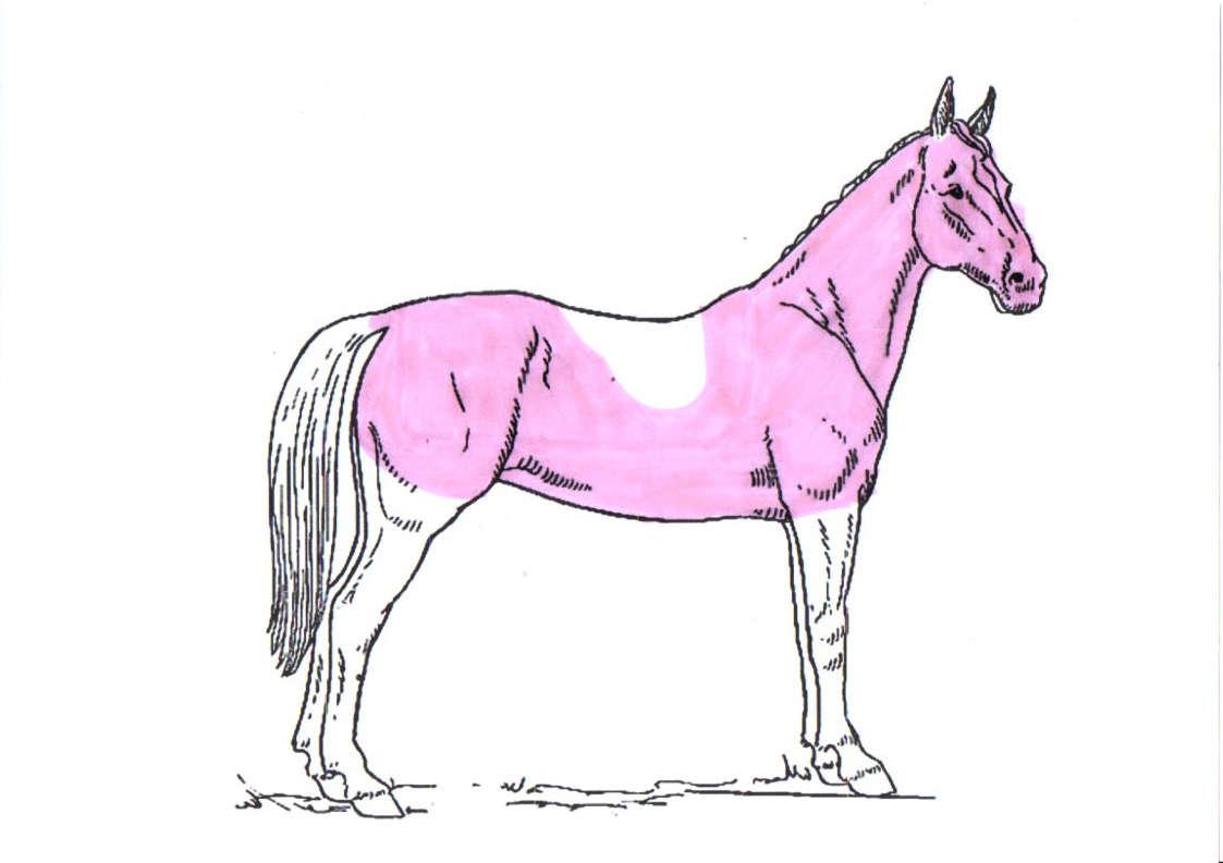 pferd-schermuster-hunter