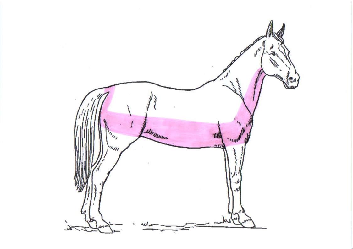 pferd-schermuster-trace