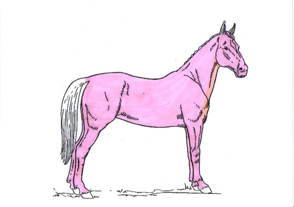 pferd-schermuster-vollschur