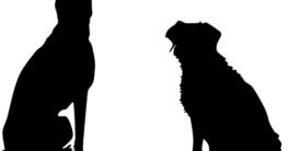 hund pflegetipps