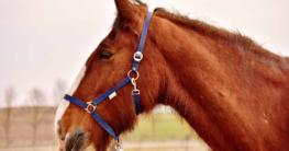 einfach pferd beim fellwechsel helfen mit nahrungsergänzungsmitteln