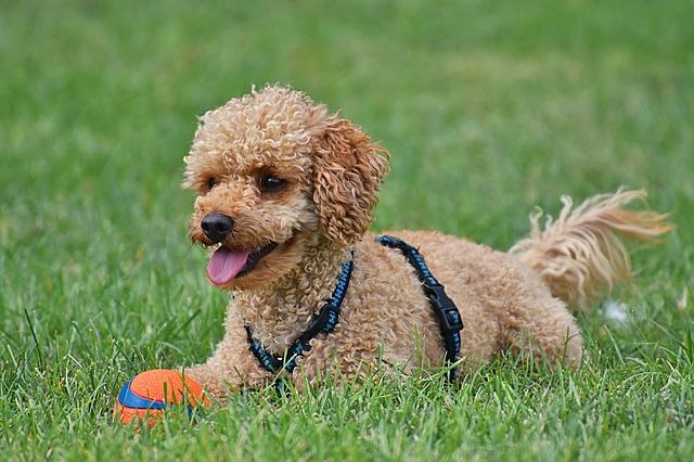 hund richtig selber scheren anleitung