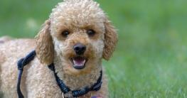 hund selber scheren