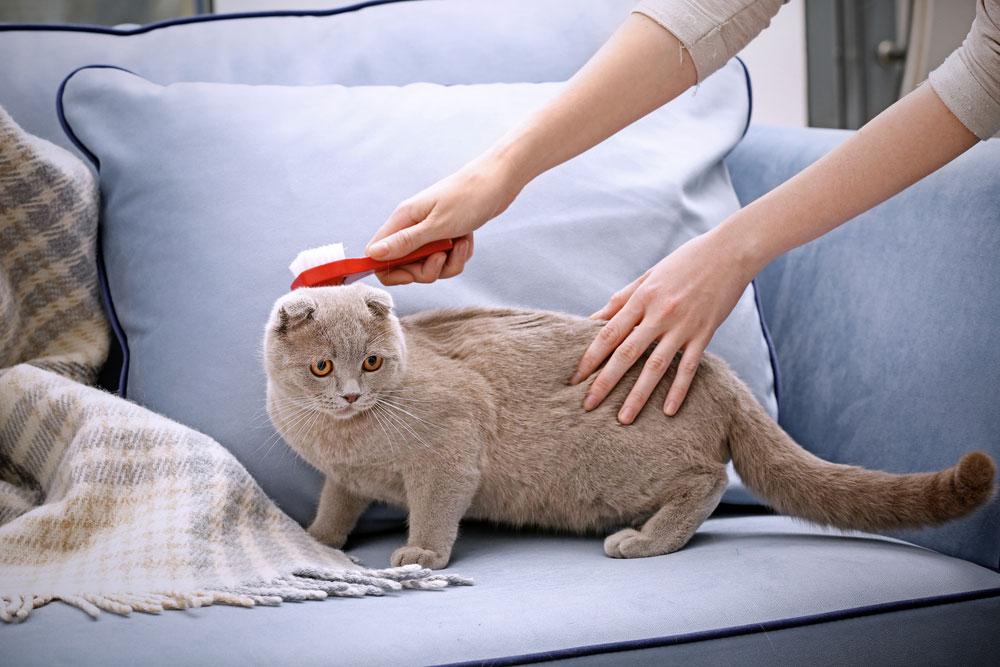 Katze richtig bürsten