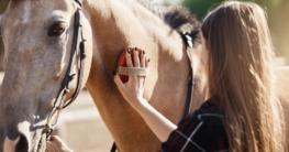 Putzzubehör-fürs-Pferd