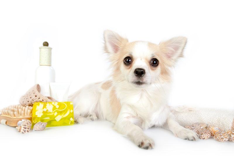 Hundeshampoo-selbermachen