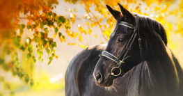 Fellprobleme-beim-Pferd