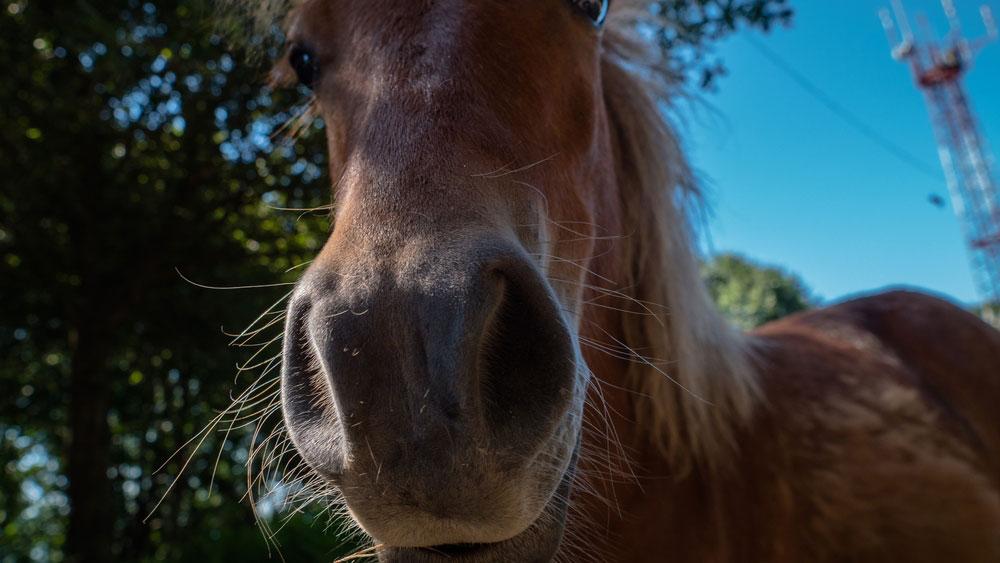 Pferd-Fell-Gesundheit