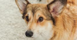 Fellprobleme-bei-Hunden-erkennen